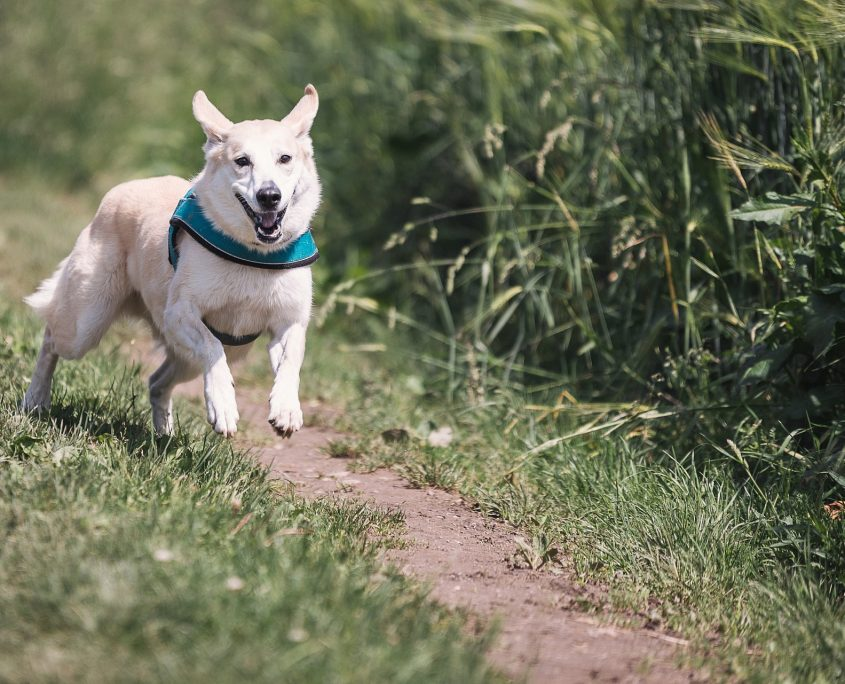 dog running through a field - farm loans